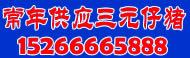 供山东仔猪   15266665888