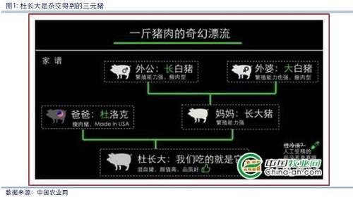二、生猪生长周期